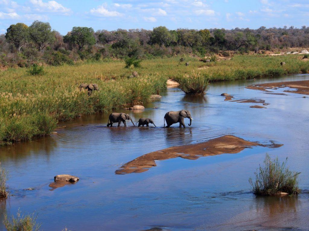 Elephants crossing a river.