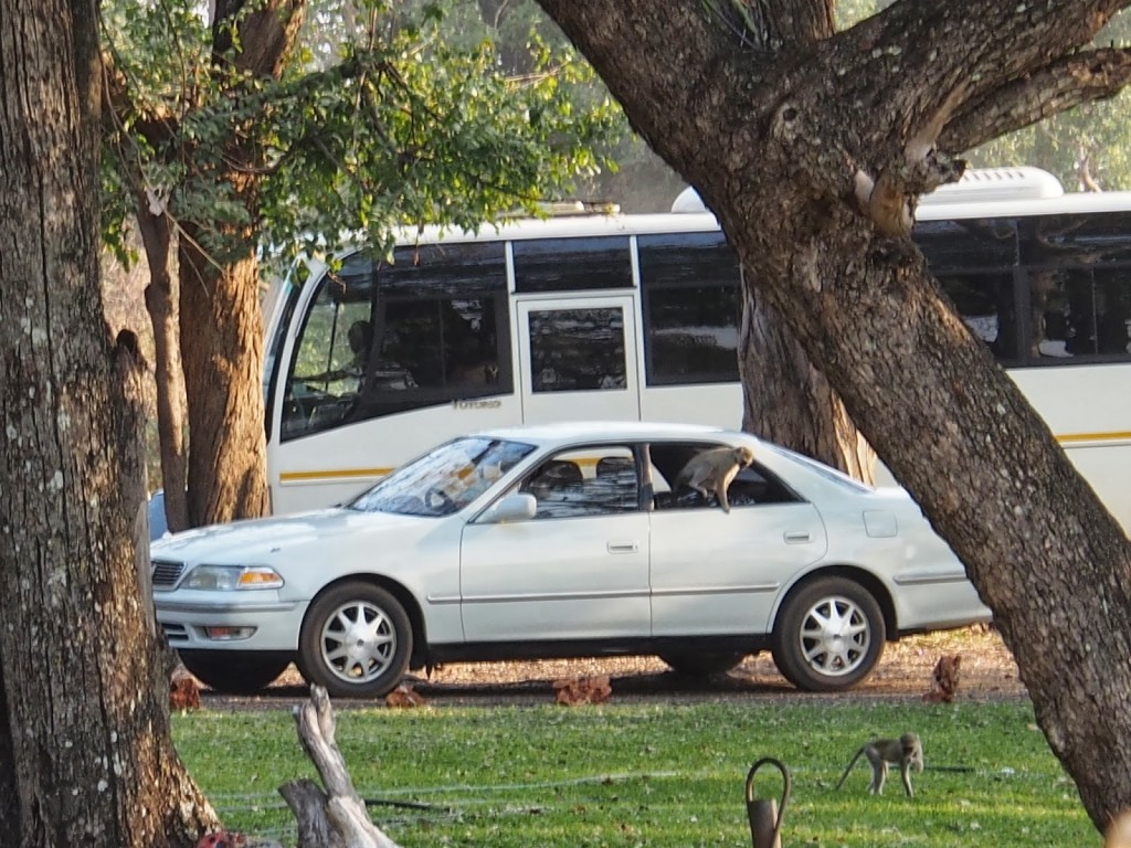 Saw naughty baboons going into the car.