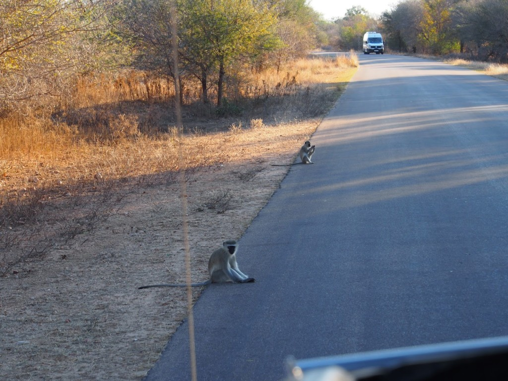 Not crossing the road but resting beside the road.