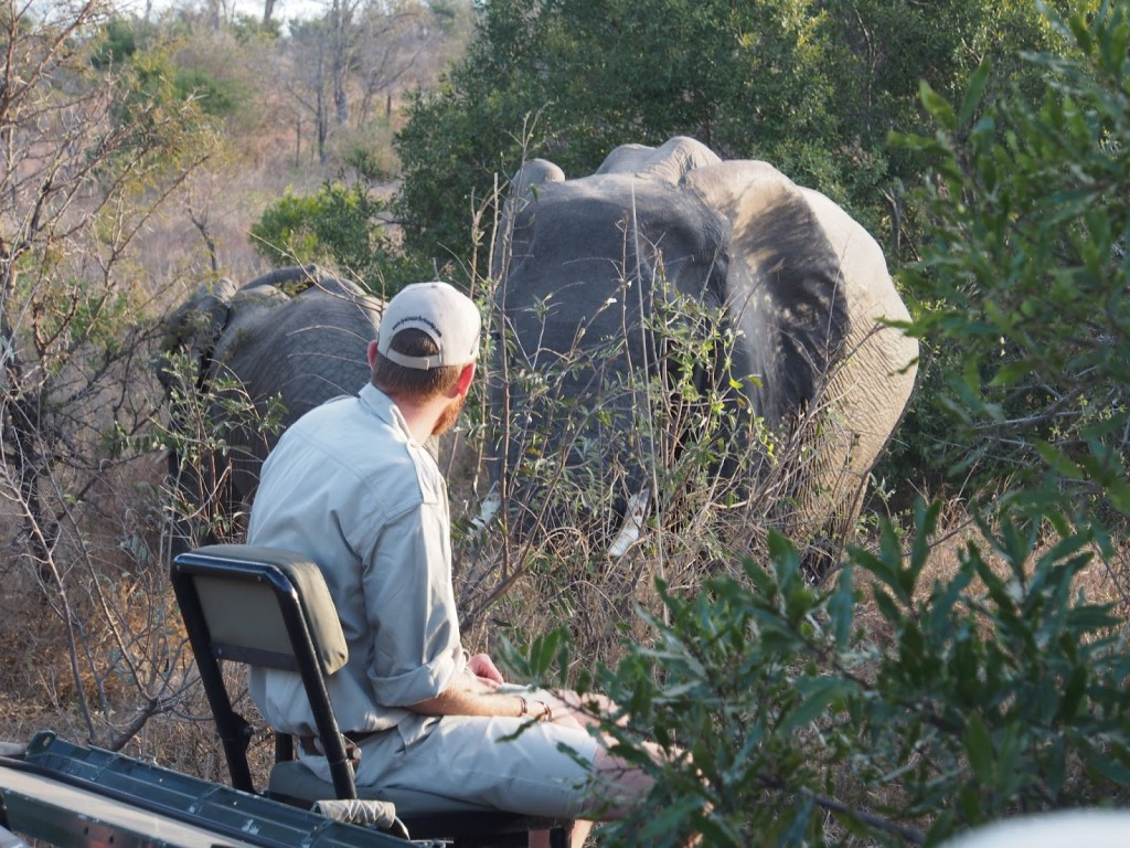Look at how close the guide was to the elephants