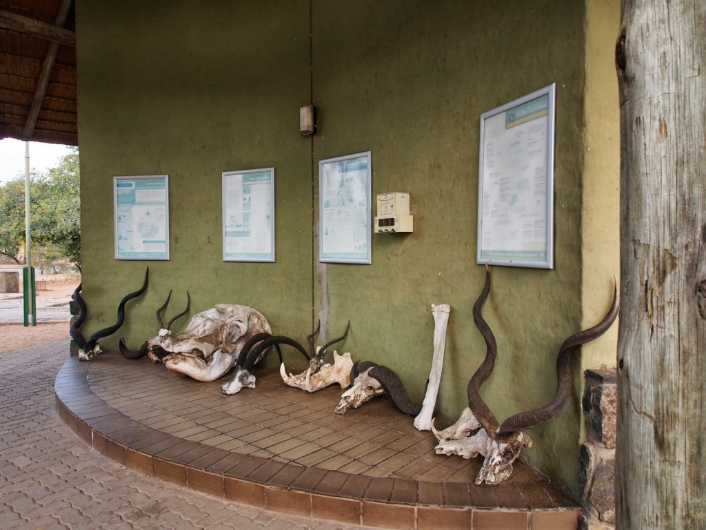 Skeletons of wildlife placed at the entrance to the park.