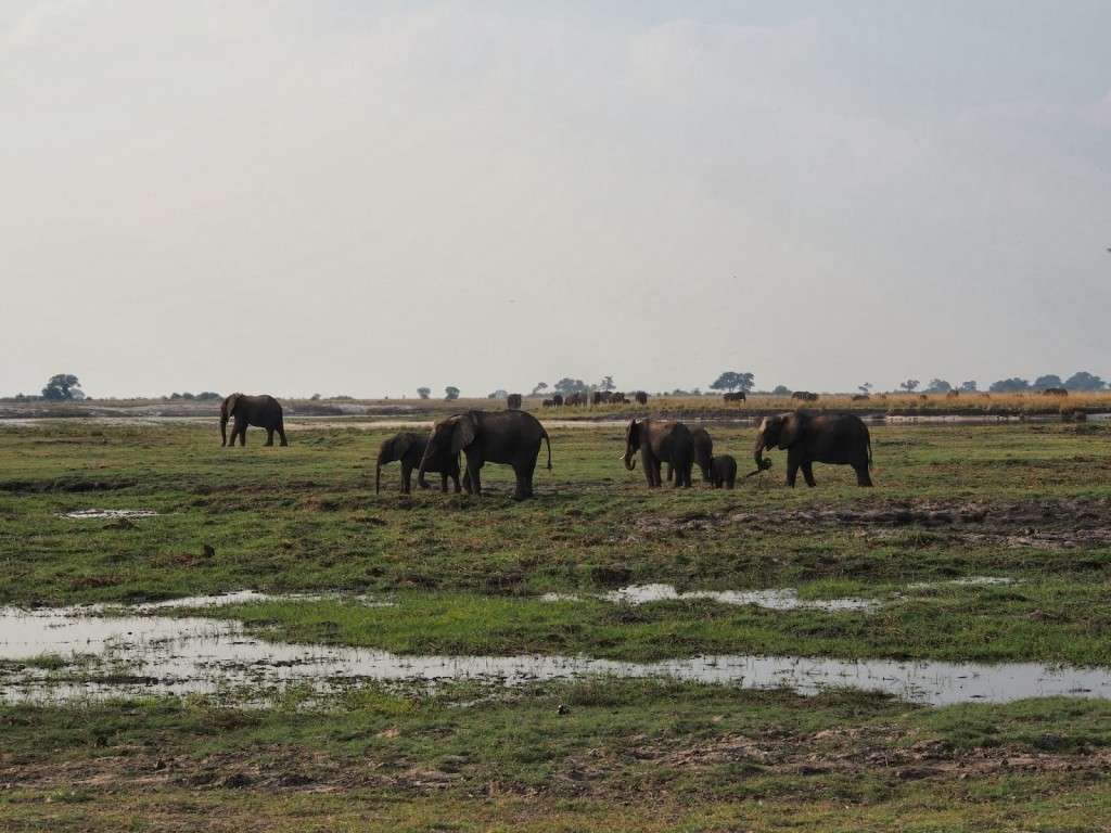 Herd in the open close to the river