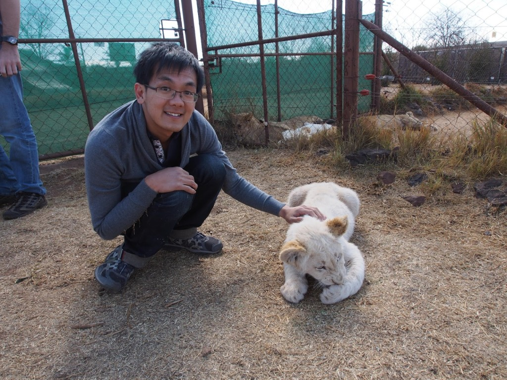 ZY with white lion pups 12