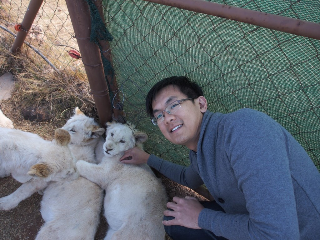 ZY with white lion pups 5