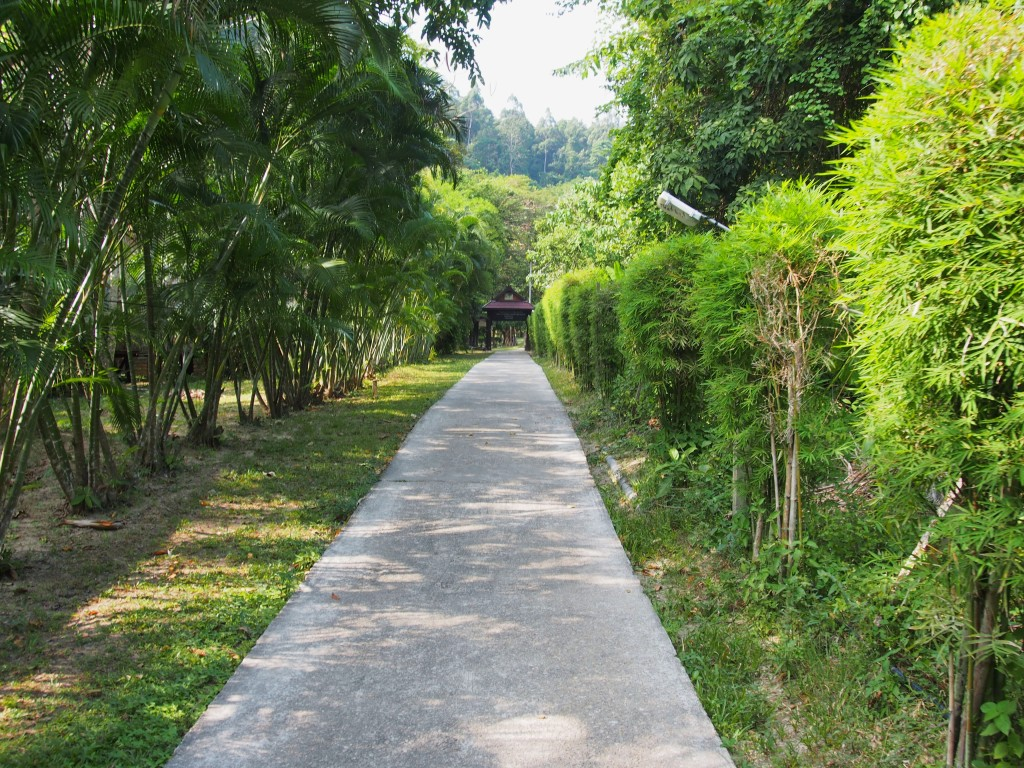 Paved road towards resort in Tonsai beach direction.