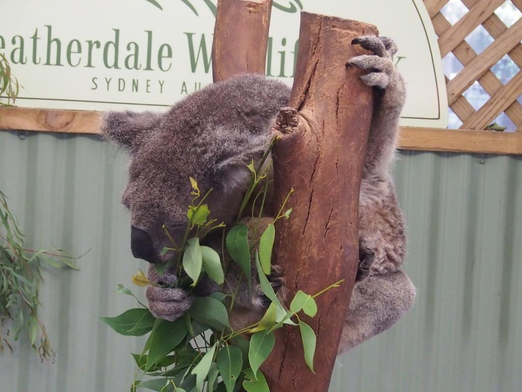 The Koala for taking photos.