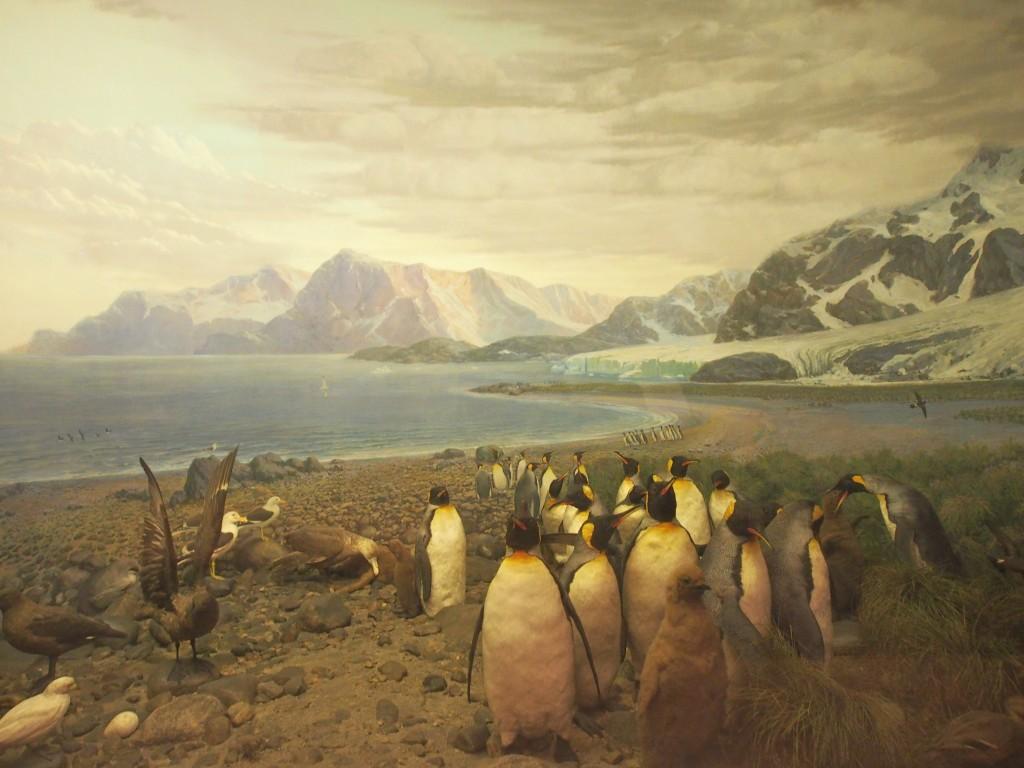 Emperor penguins of Antarctica.