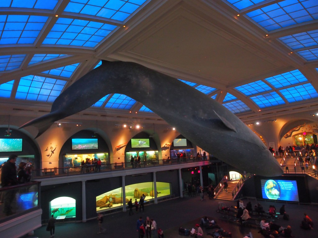 Giant whale hanging from the ceiling.