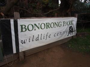 Bonorong Wildlife center.
