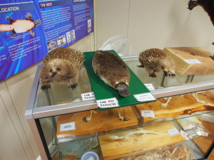 Exhibits at Platypus house.