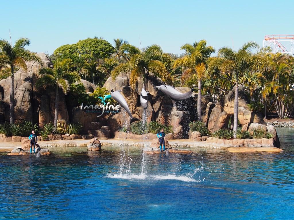 Death defying dolphins acrobatics