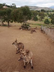 Kango county.
