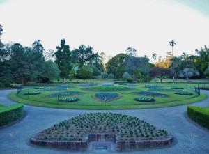Plants arrangement in the Botanic Gardens.