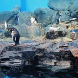 Langkawi 2015 Day 3 – Underwater World and Home Sweet Home