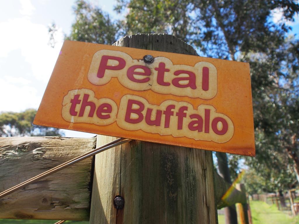 Petal the Buffalo.