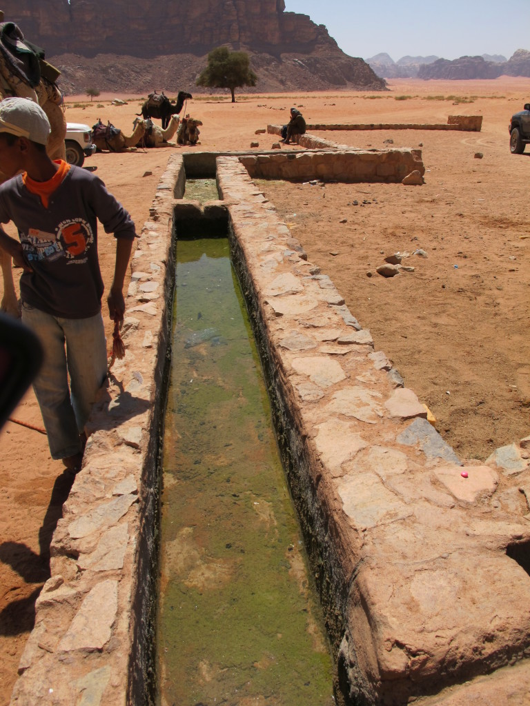 Water from nearby spring where camels come drink.