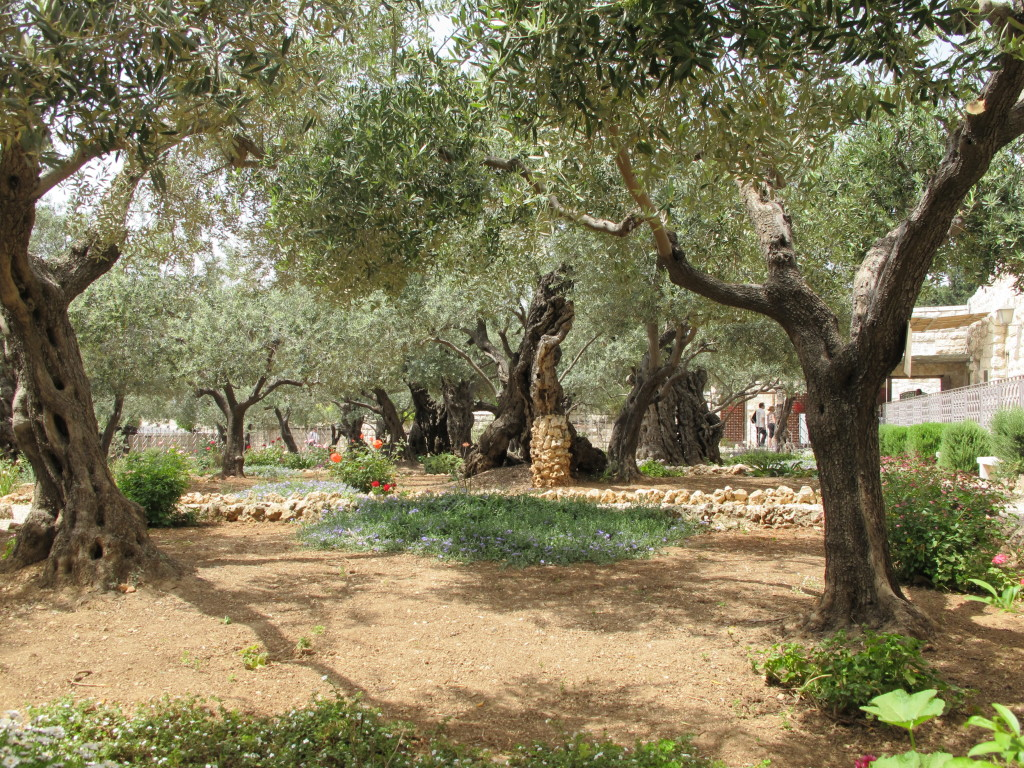 Garden of Olives.