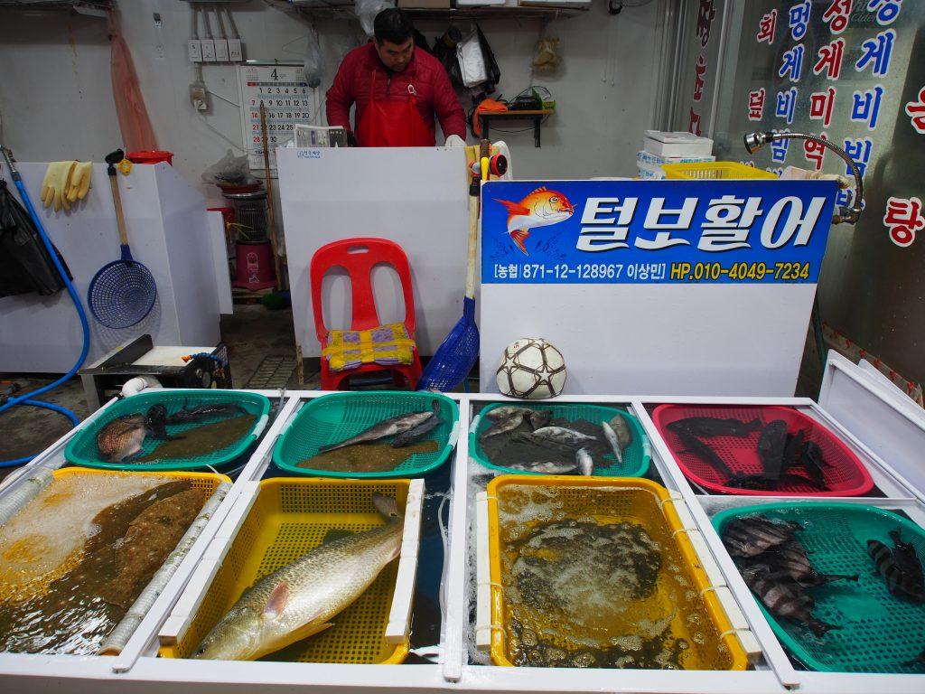 Geoje/Tong Yeong 2019 Day 3 – Cruise to Oedo Island, Tong Yeong